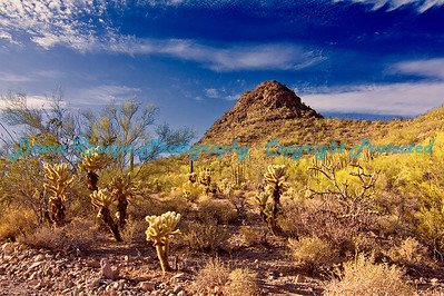 Organ Pipe National Monument - Ajo, Arizona  #AZ001