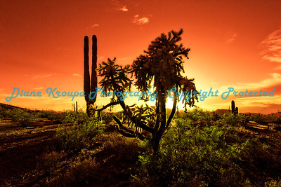 Organ Pipe National Monument.  Photo #2645