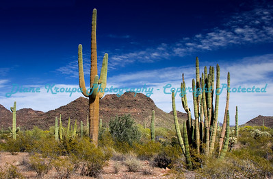 Organ Pipe National Monument, Southern Arizona.  Photo #OP-1