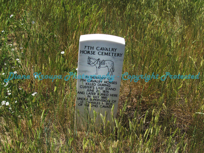 Bighorn Battlefield headstone for cavalry horses killed during Custer's Last Stand Battle - June 25, 1876.  Photo# 7