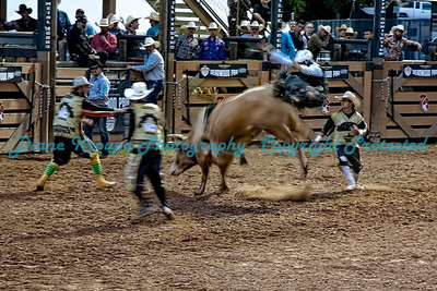 Cowboy tossed off in a ball.  Photo #307