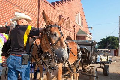 Mule Team Unhitching Terry at Missouri State Fair 2018 - Photo 558