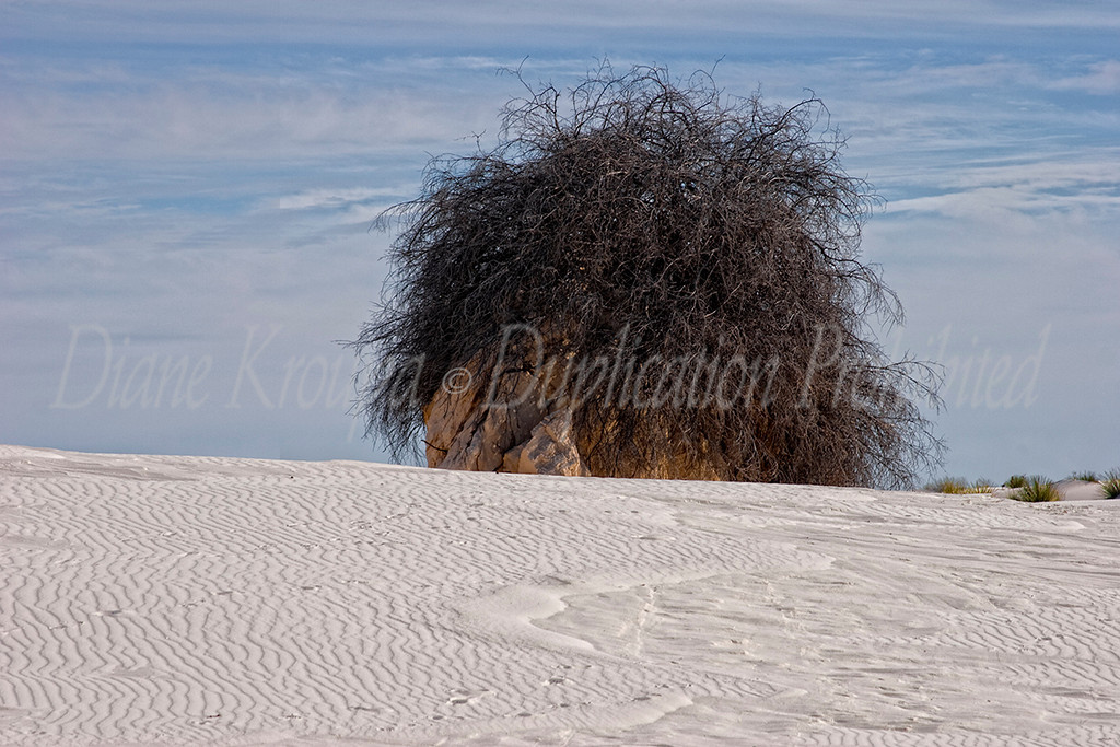 White Sands National Monument, New Mexico.  Photo #NM-116