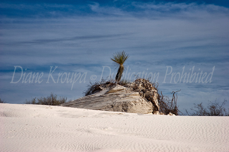 White Sands National Monument, New Mexico. Photo #NM-115
