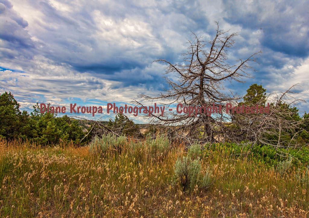 Theodore Roosevelt National Park - North - North Dakota at Oxbow Overlook.  Photo# 51