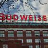 Budweiser Brewery, St. Louis, MO.  Photo #AB154