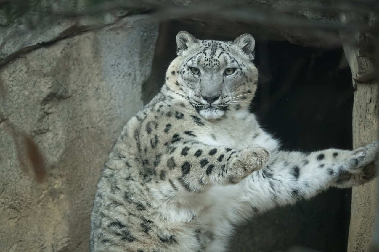 SLW   Philadelphia Zoo  12 March 2017