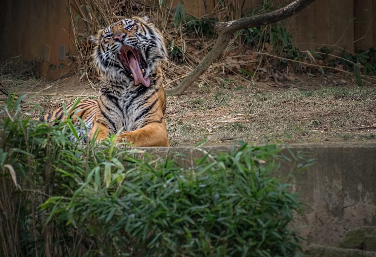 SLW  National Zoo  12 FEB 2017