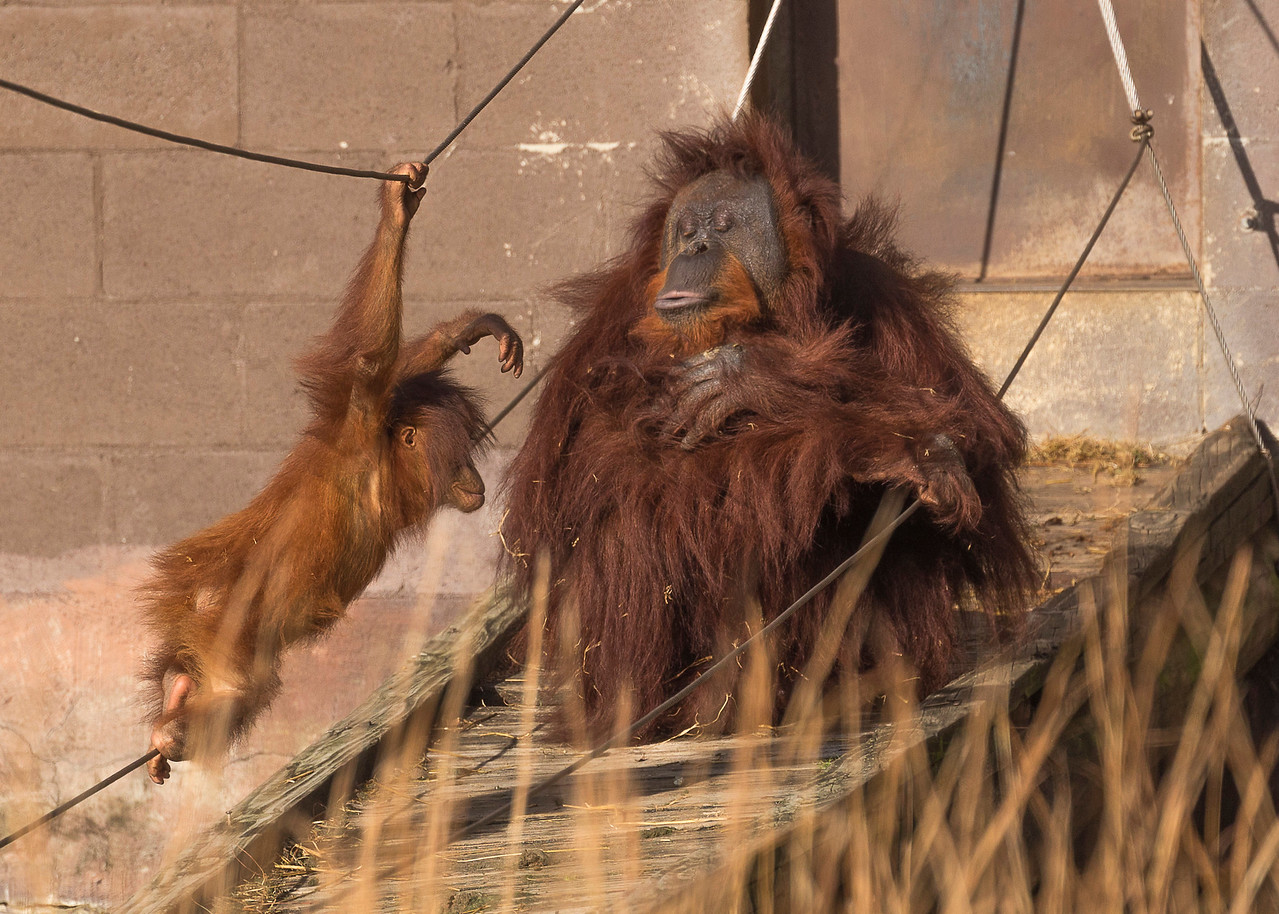 Kacy:    Richmond Zoo  2017