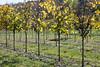 1711_Casey Tree Farm 037