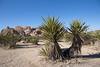 1811_Palm Springs 016