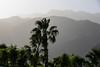 1811_Palm Springs 002