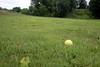 1906_golf course 30