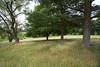 1906_golf course 23
