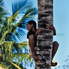 Smiling boy climbing in a coconut palm, Highway EN 1 near Inhambane, Mozambique