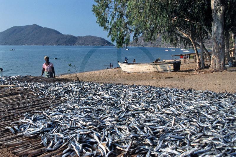 Drying fish, Monkey Bay, Lake Malawi, Malawi