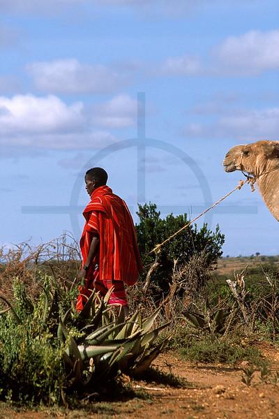 Samburu with dromedary, Maralal, Kenya