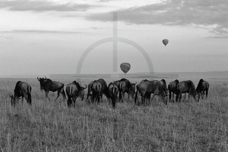 Masai Mara ballooning at dawn, Kenya