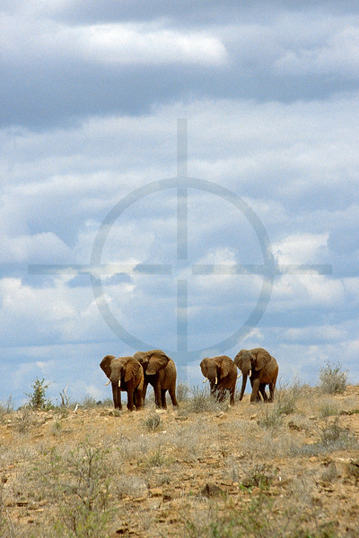 Herd of elephants, Tsavo East National Park, Kenya