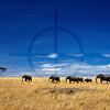 Herd of elephants crossing the open savanna, Masai Mara National Reserve, Kenya