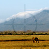 Lone elephant, Tsavo East National Park, Kenya