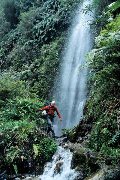Hiker crossing a rivulet near a waterfall in the temperate rainforest of Vicente Pérez Rosales National Park, X Región, Chile