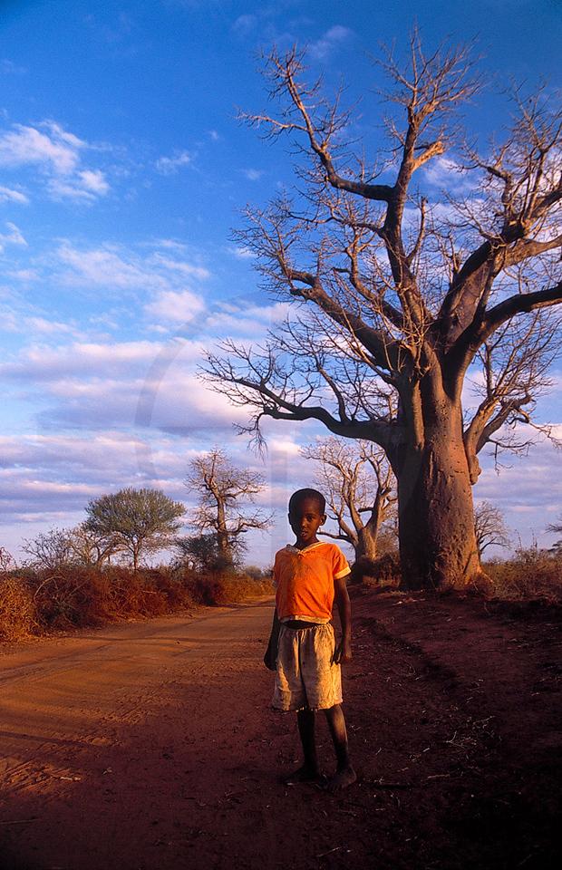 African roadside scene: boy and baobabs, Kibwezi, Kenya