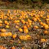 Pumpkin-19