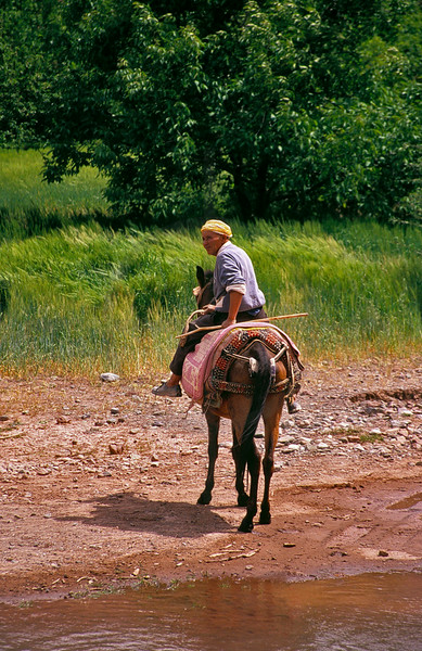 Berber on horse at a stream, M'Goun area, High Atlas, Morocco