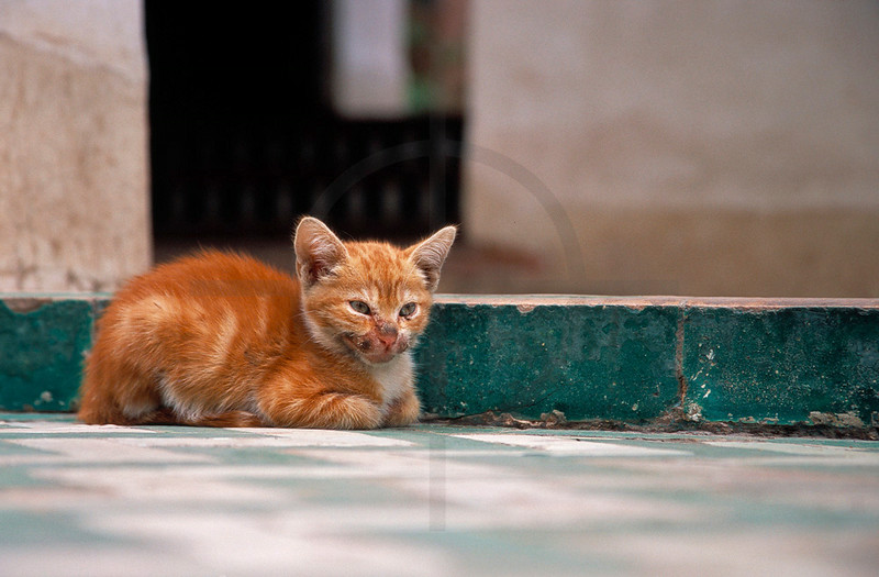 Dirty red cat at rest, medina of Marrakesh, Morocco