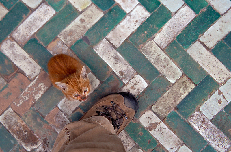 Sizing up the cat, medina of Marrakesh, Morocco