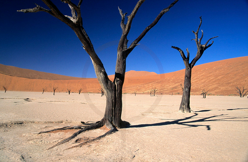 Dead trees in Dead Vlei, Namib Naukluft National Park, Namibia