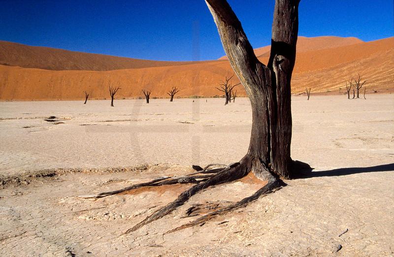 Dead acacias in Dead Vlei, Namib Naukluft National Park, Namibia