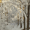 snowy day in skillman
