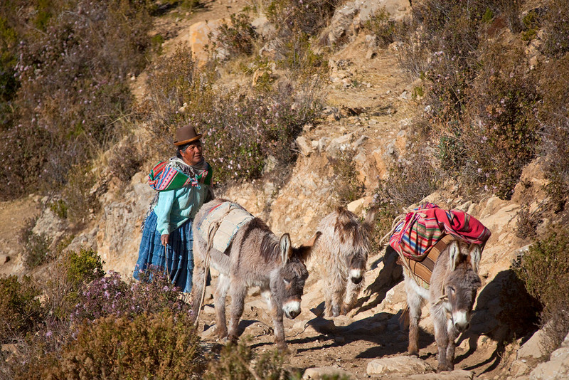 Bolivian woman with donkeys, Isla del Sol, Bolivia