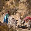Bolivian woman with donkeys, Isla del Sol, Bolivia