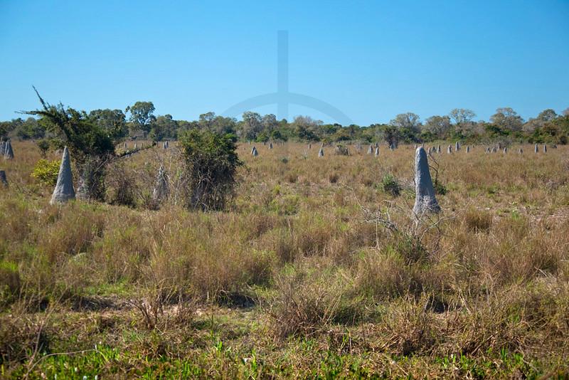 Northern Pantanal landscape, Brazil