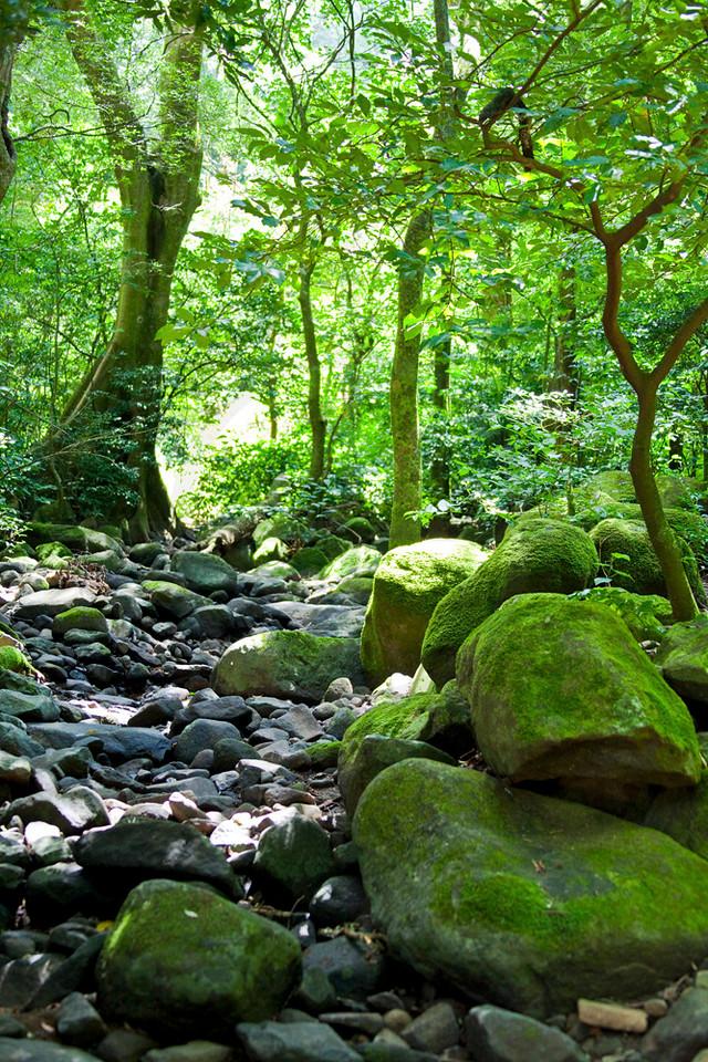 Tropical lowland forest at the foot of the Rincón de la Vieja Massif, Rincón de la Vieja National Park, Costa Rica