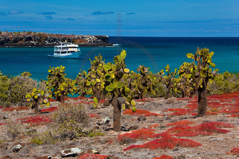 Sea purslane, prickly pear cacti and a tourist boat, South Plaza, Galápagos Islands, Ecuador