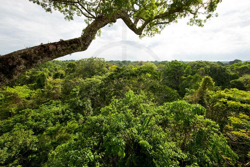 Lowland tropical rainforest, Yasuní National Park, Ecuador