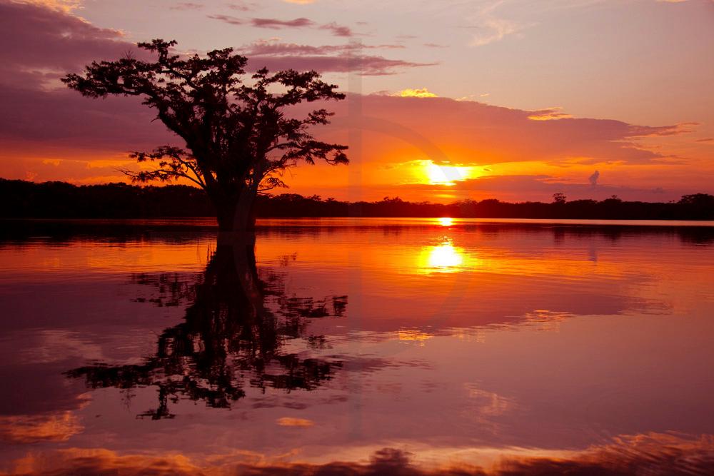 Laguna Cuyabeno at sunset, Cuyabeno Faunal Reserve, Ecuador