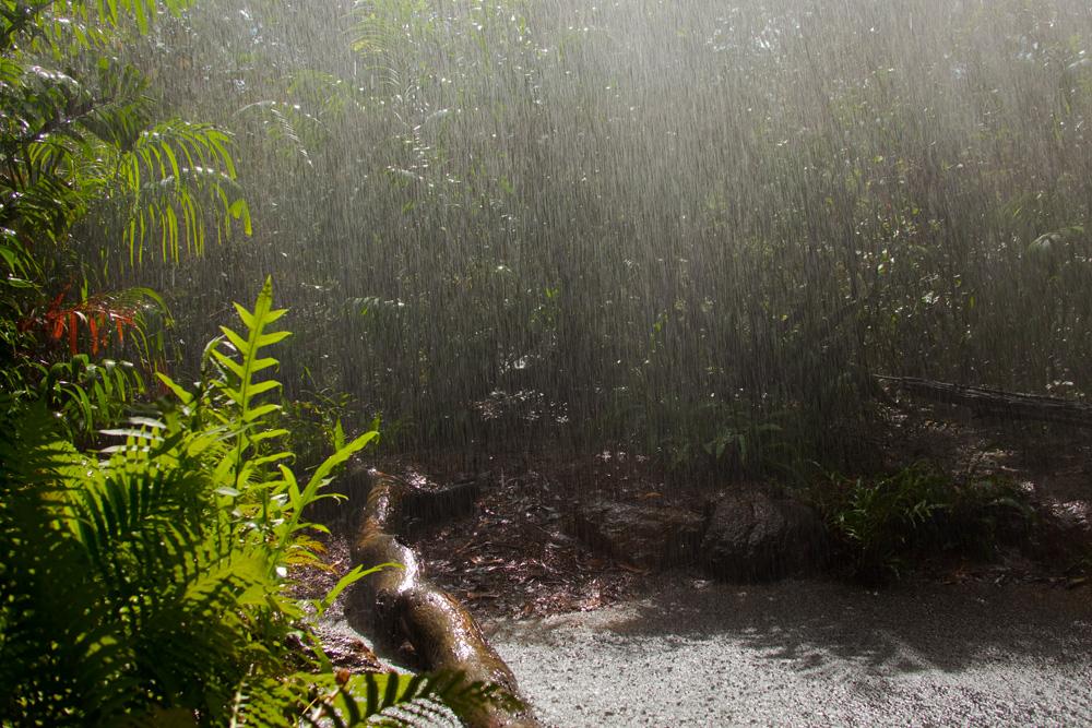 Downpour, Territory Wildlife Park, Berry Springs, Northern Territory, Australia