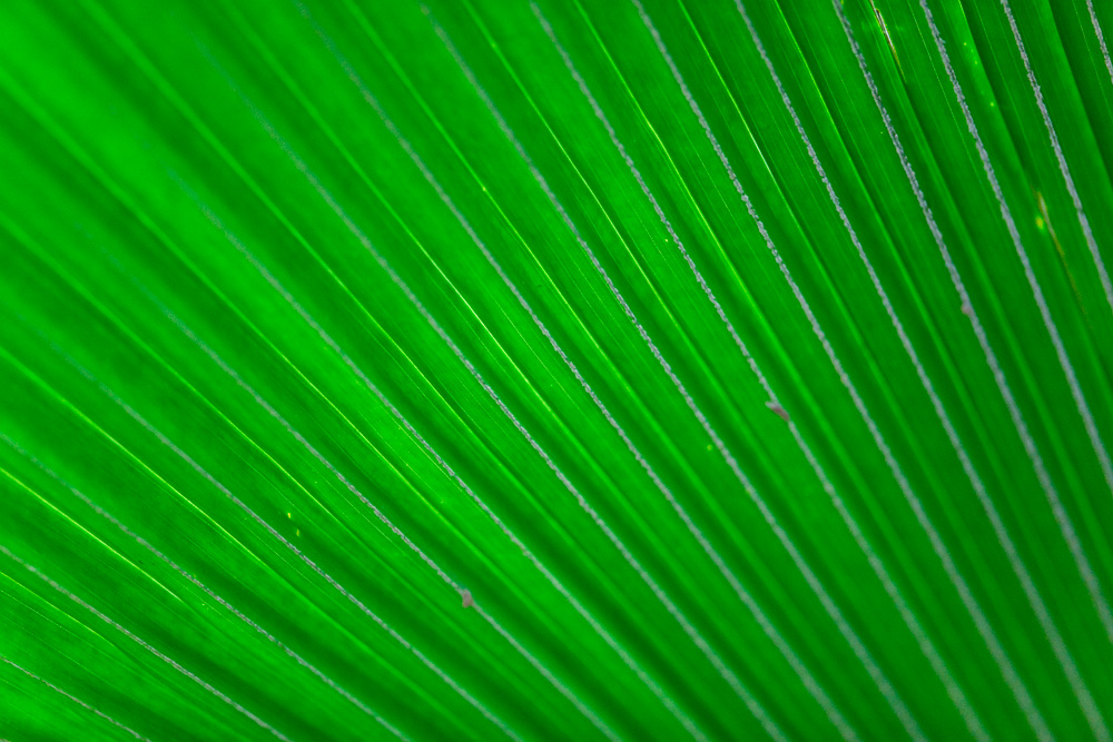 Leaf, Kimberley Region, Western Australia, Australia