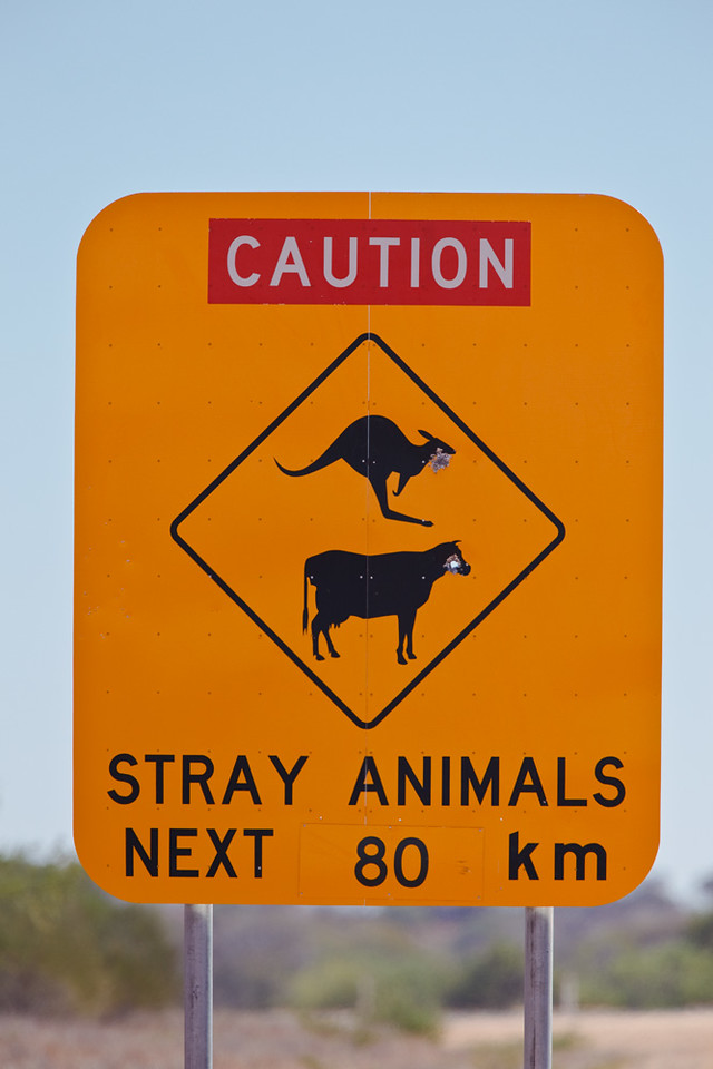 Road sign warning for stray animals, road between Minilya Roadhouse and Exmouth, Western Australia, Australia