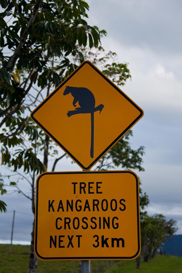 Tree kangaroo road sign, Highway 25 in between Millaa Milaa and Malanda, Atherton Tableland, Queensland, Australia