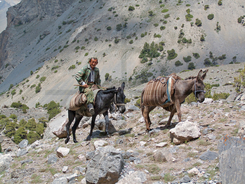 Tajik shepherd and mules, Fan Mountains, Tajikistan