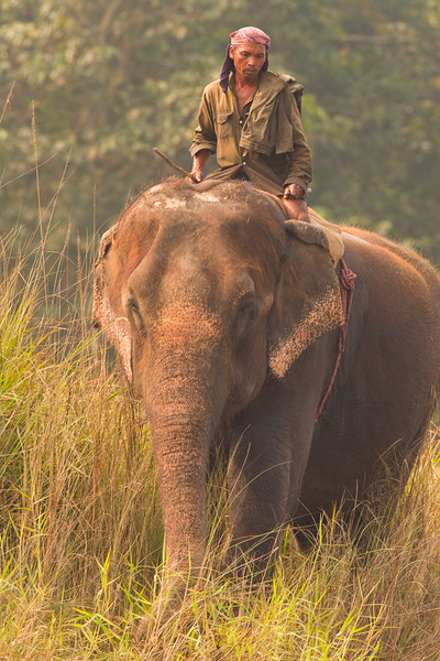 Mahout on Asian elephant, Chitwan National Park, Nepal