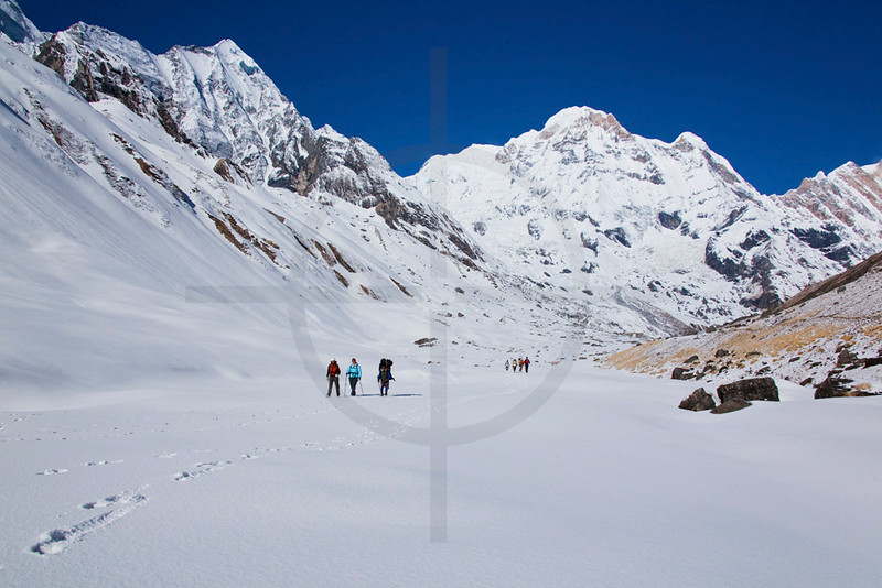 Group of trekkers and a porter descending from Annapurna Base Camp in fresh snow , Annapurna Sanctuary, Nepal