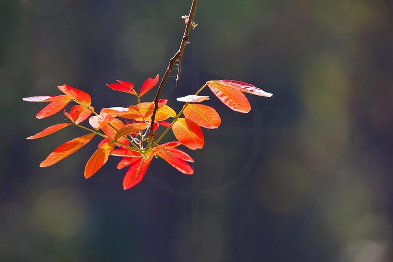 Foliage on fire, Royal Bardia National Park, Nepal