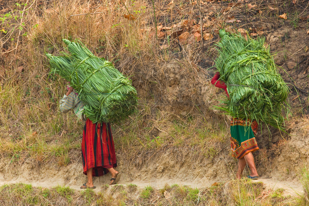 Women carrying fresh leaves and grasses out from Chtiwan National Park to feed their cattle, Sauhara, Nepal